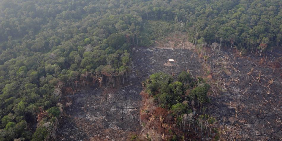 Cinco datos claves sobre la Amazonia, el pulmón del mundo