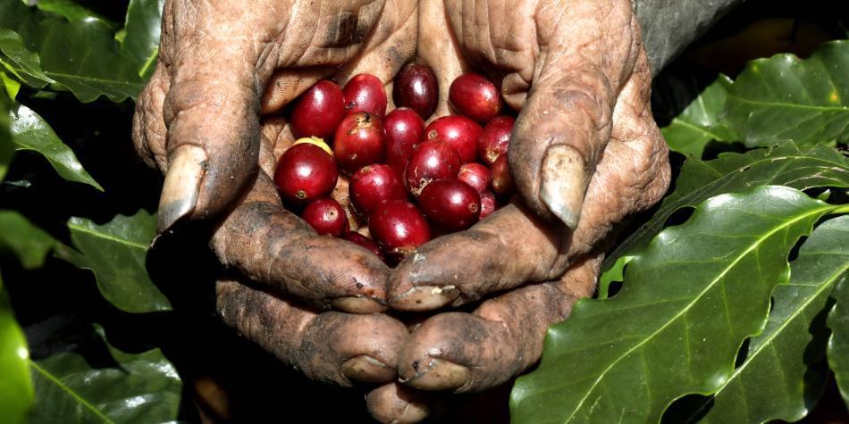 Producción de café colombiano crece 3 % en lo corrido del año