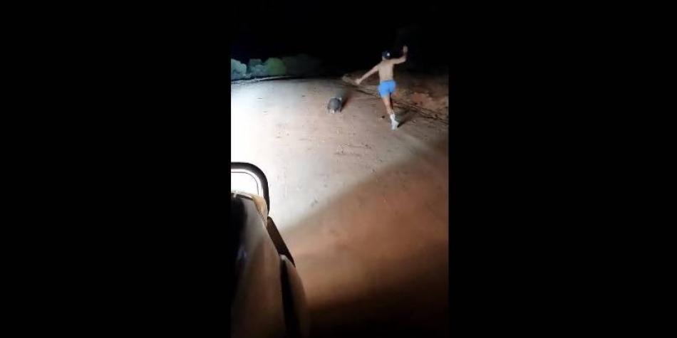 Impactante momento en el que un policía asesinó a pedradas a un wómbat