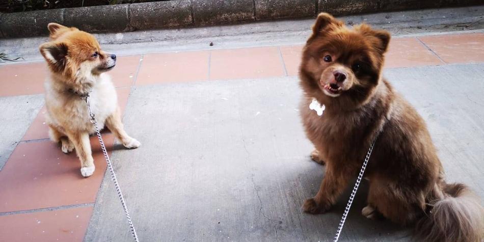 Joven denuncia que lo drogaron y le robaron sus dos perros en Medellín
