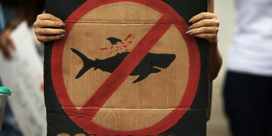 Las implicaciones de poner cuotas a las aletas de tiburón / Opinión