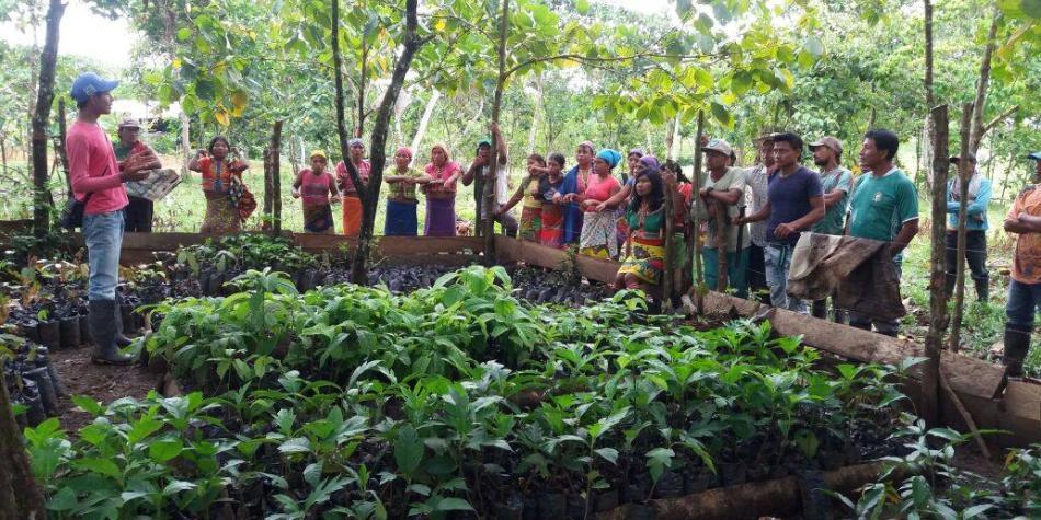 Los pueblos que dejaron de talar para reforestar una selva