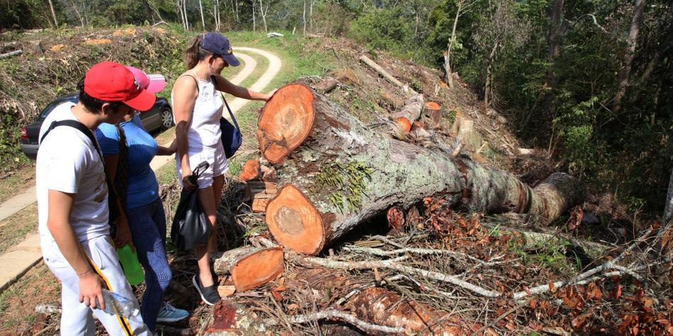 Denuncian 'arboricidio' en Floridablanca por obra vial