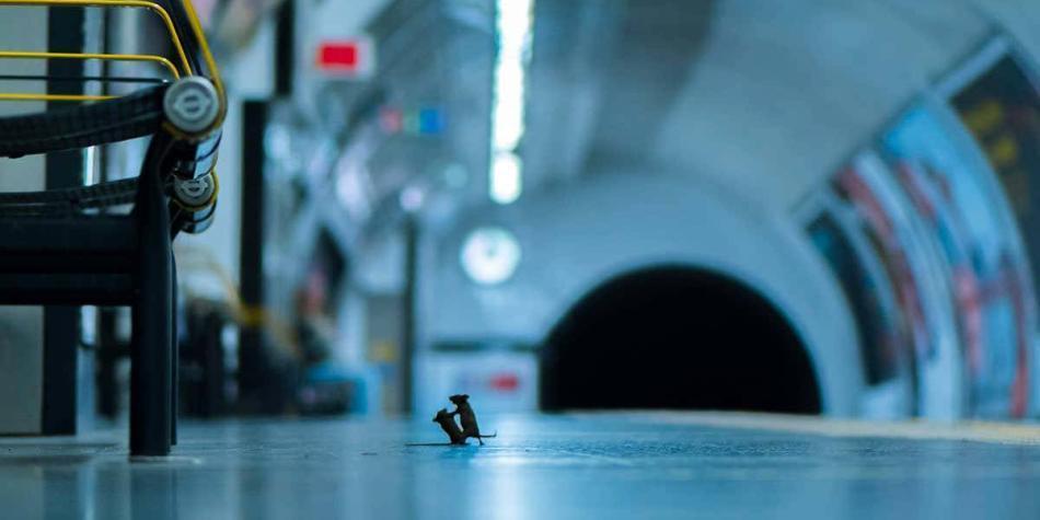 Premian foto de pelea de ratoncitos en el metro de Londres