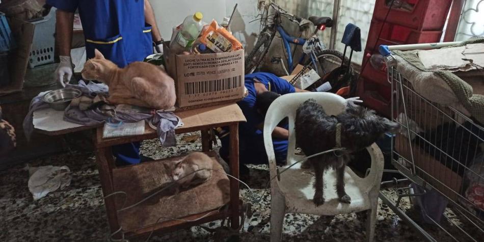 Así fue el rescate de 33 gatos y 22 perros de una casa en Barranquilla