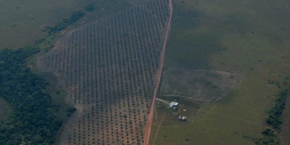 Un colombiano acaba con 1.278 m2 de bosque por su forma de consumo