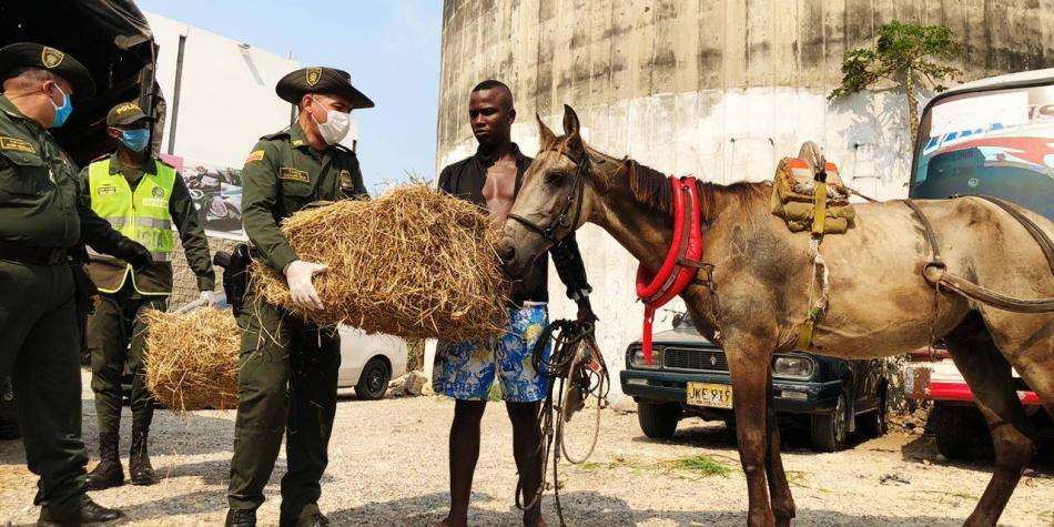 Policía Nacional lidera campañas a favor de los animales en Atlántico