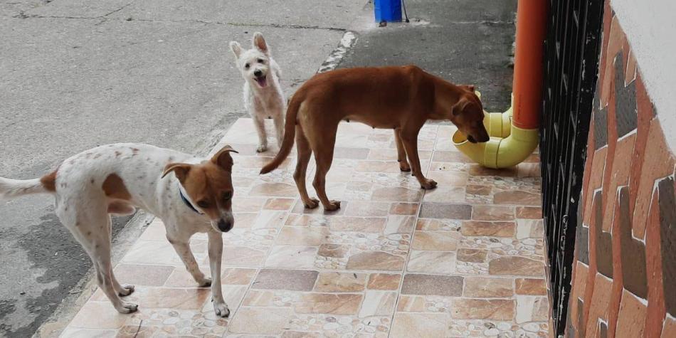 Solidaria iniciativa con perros y gatos en el Meta por la cuarentena