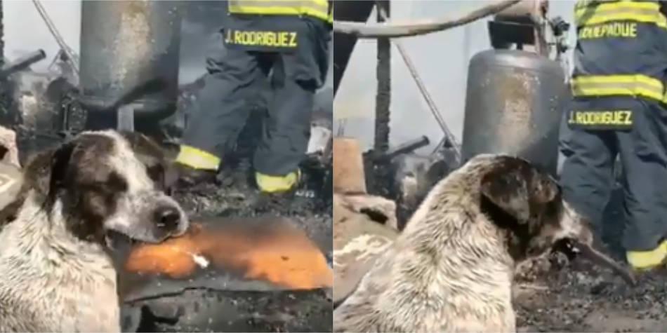 El desconsolado llanto de un perro tras incendio que acabó con su casa