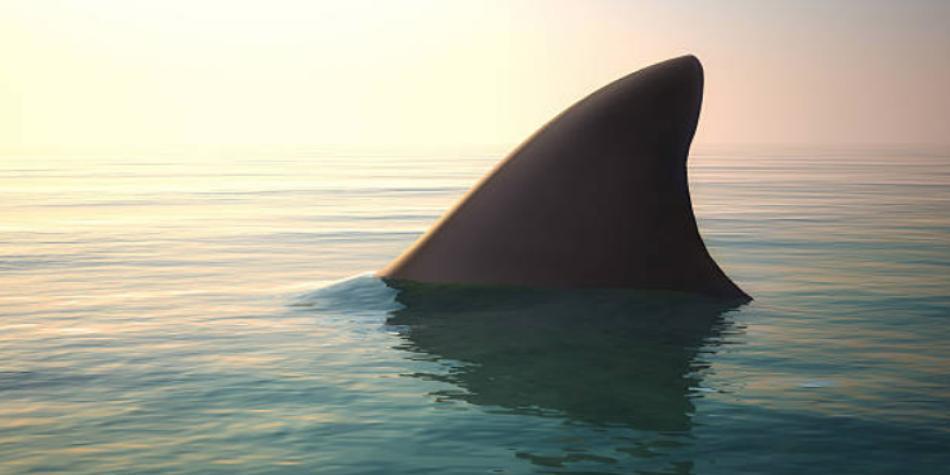 Colombia prohibió la pesca de tiburones en sus océanos