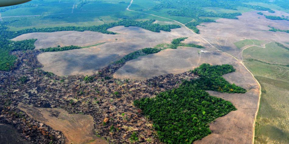 Pese a la pandemia, perdimos 75 mil hectáreas de bosque en Colombia
