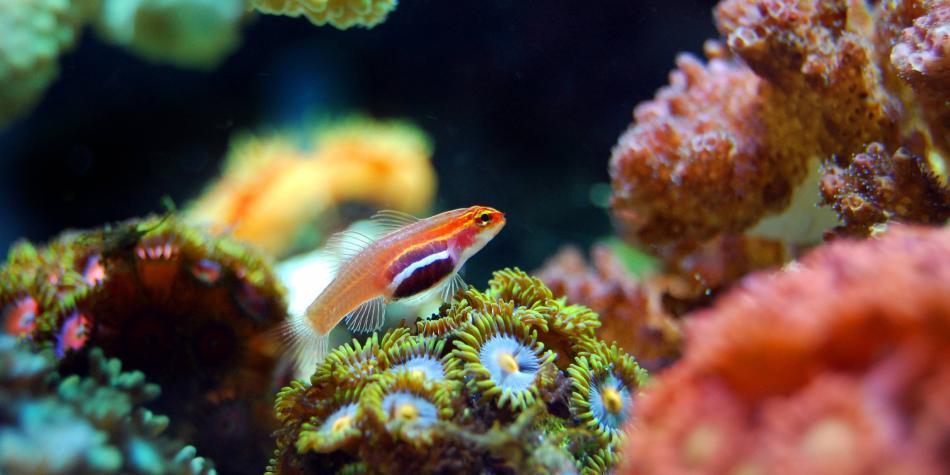 El declive de biodiversidad tropical marina será peor a fin de siglo