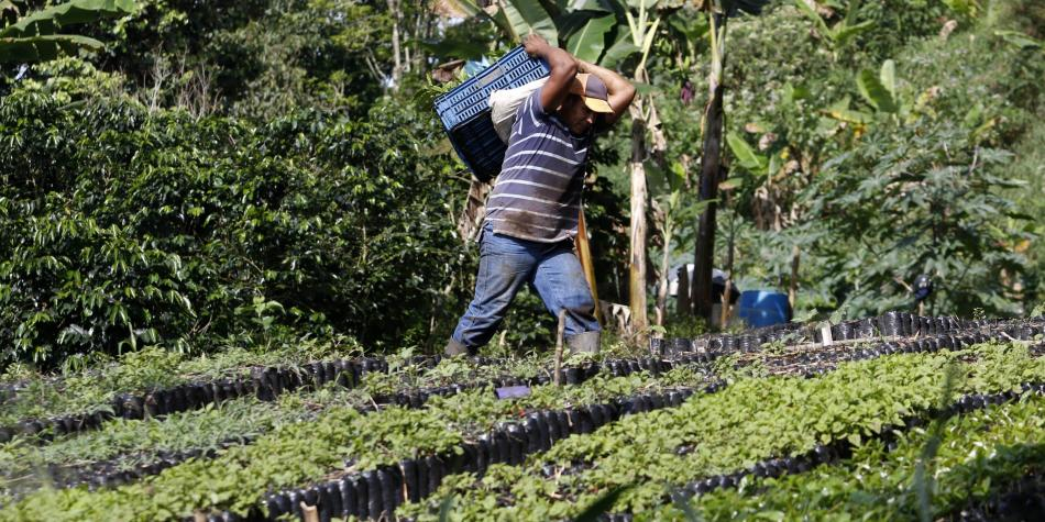 MinAgricultura prepara proyecto para aliviar finanzas de productores
