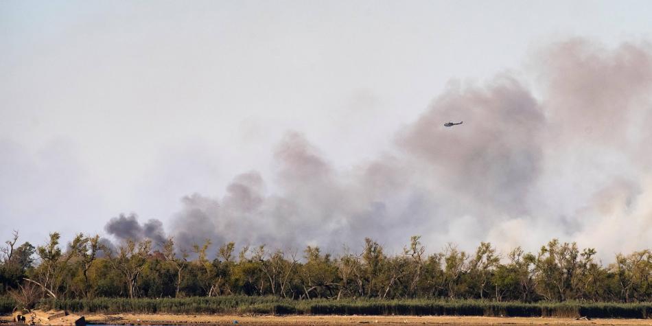 Biodiversidad del Delta del Paraná, amenazada por incendios históricos