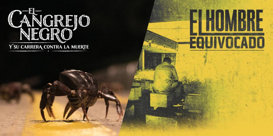 EL TIEMPO, ganador de tres premios nacionales de periodismo digital