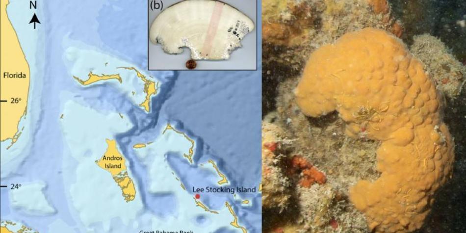 Esponja marina ofrece un registro del clima de los últimos 600 años