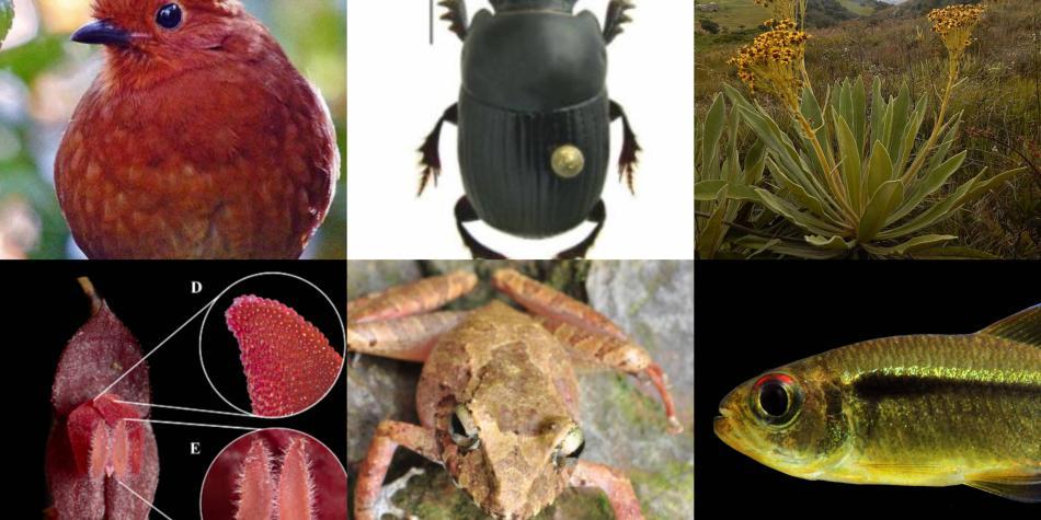 Top de las especies que fueron descubiertas en Colombia en el 2020