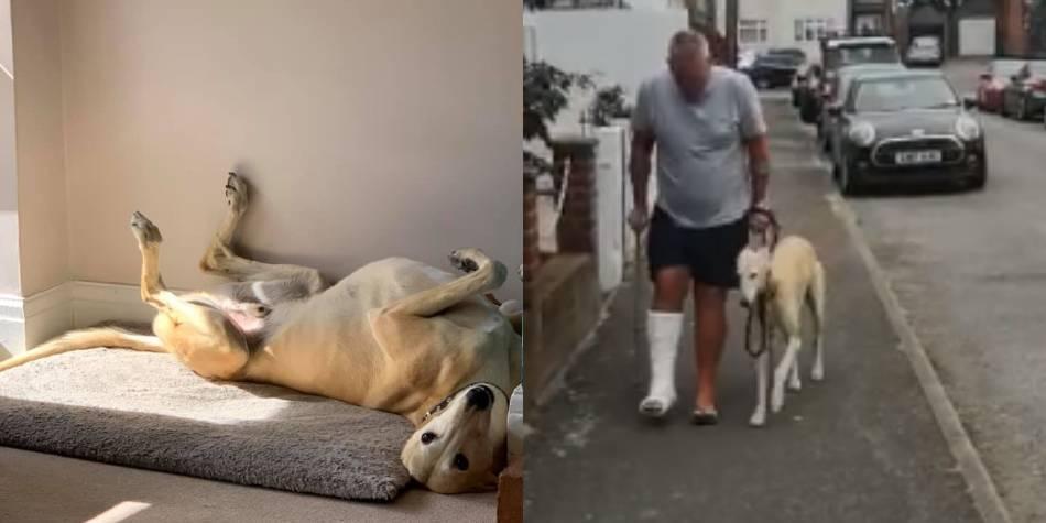 Creyó que su perro estaba golpeado, pero él lo imitaba por compasión