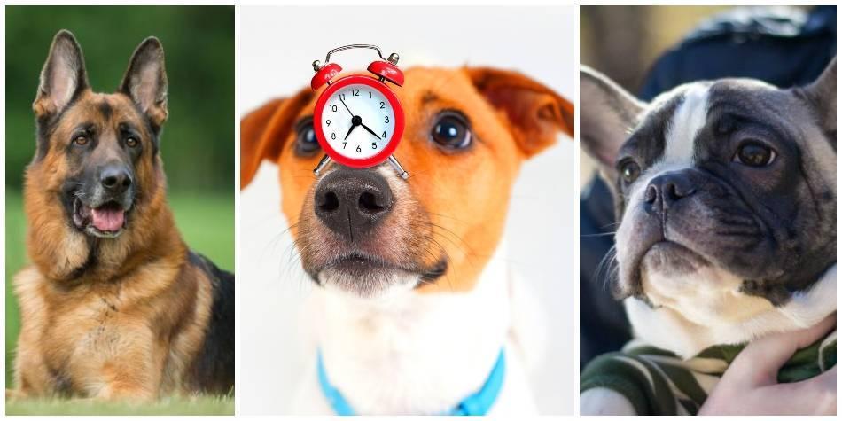 Las razas de perros más buscadas en Argentina para mascotas