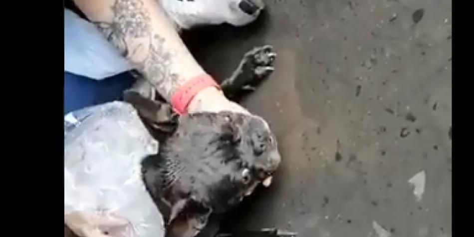 La dolorosa agonía de una perrita después de un viaje terrestre