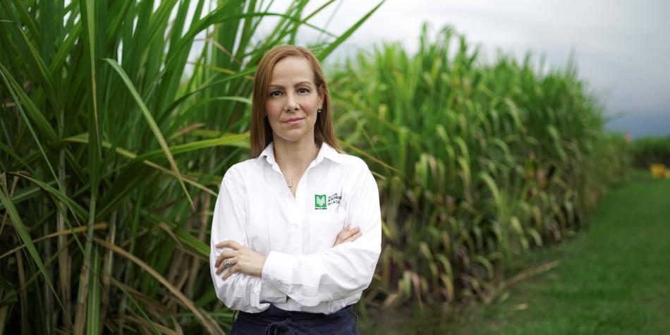 IVA del 19 % al azúcar afectaría a 94 % de hogares: Asocaña