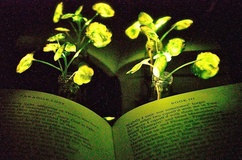 Plantas que iluminan