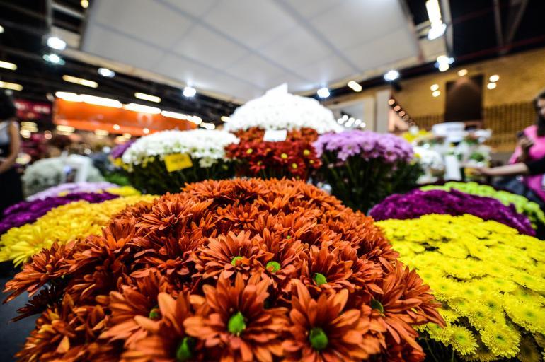 Las Flores Que Mas Exporta Colombia Otras Ciudades Colombia