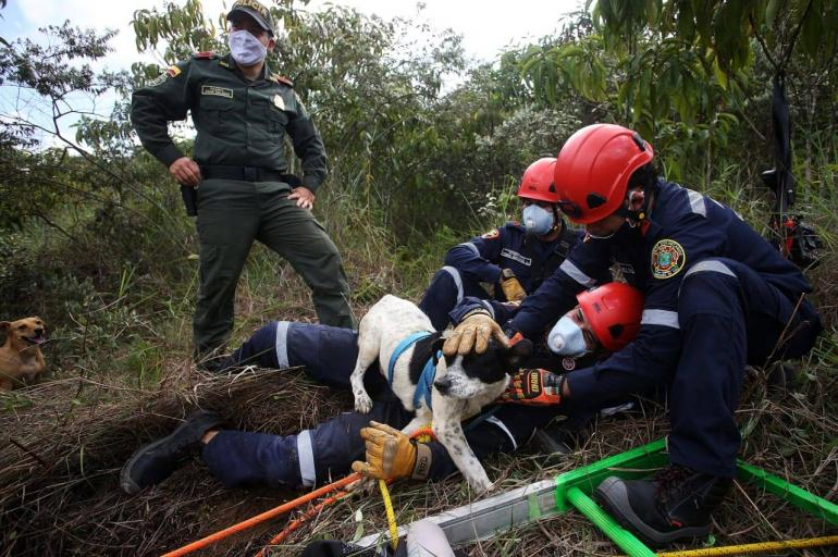 Rescate perro en Cali