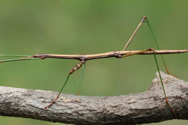insecto u