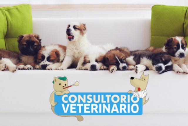 terapia hormonal de próstata e imágenes de mascotas