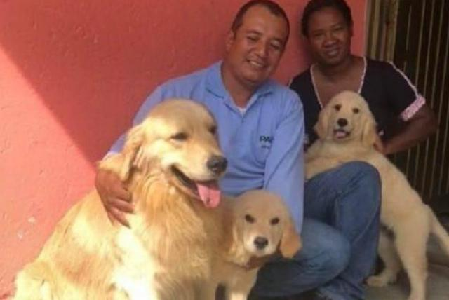 Recuperan 3 de 4 perros robados a expositor bogotano en Cali - Cali -  Colombia - ELTIEMPO.COM