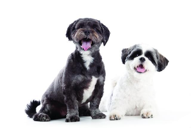La Forma De Tratar A Los Animales Puede Definir Cómo Son Los