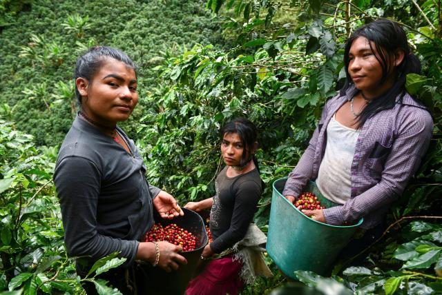 Niña follada por trans porno Las Indigenas Trans Que Se Refugian En Los Cafetales De Risaralda Otras Ciudades Colombia Eltiempo Com