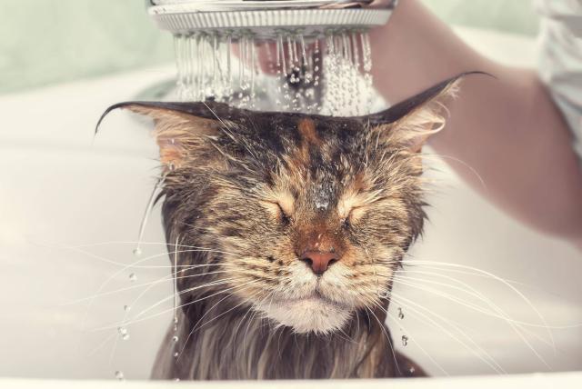 La hora del baño en perros y gatos - Vida - ELTIEMPO.COM