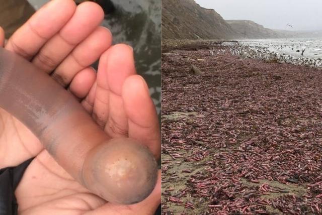 dimensiunea palmei dimensiunea penisului