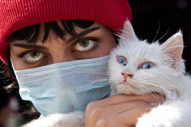 ¿Por qué los gatos permanecerán infectados?