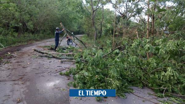 Al menos 30 árboles cayeron en Útica por fuerte vendaval - El Tiempo