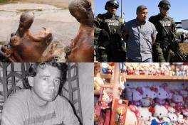 Los hipopótamos de Escobar y más excentricidades de narcos colombianos