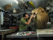 El antioqueño que inmortaliza animales