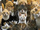 Policía china evitó que 500 gatos fueran cocinados en restaurantes
