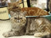Amistad entre el hombre y los gatos tiene 10.000 años