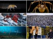 Las fotos ganadoras del premio Wildlife photographer of the year 2019