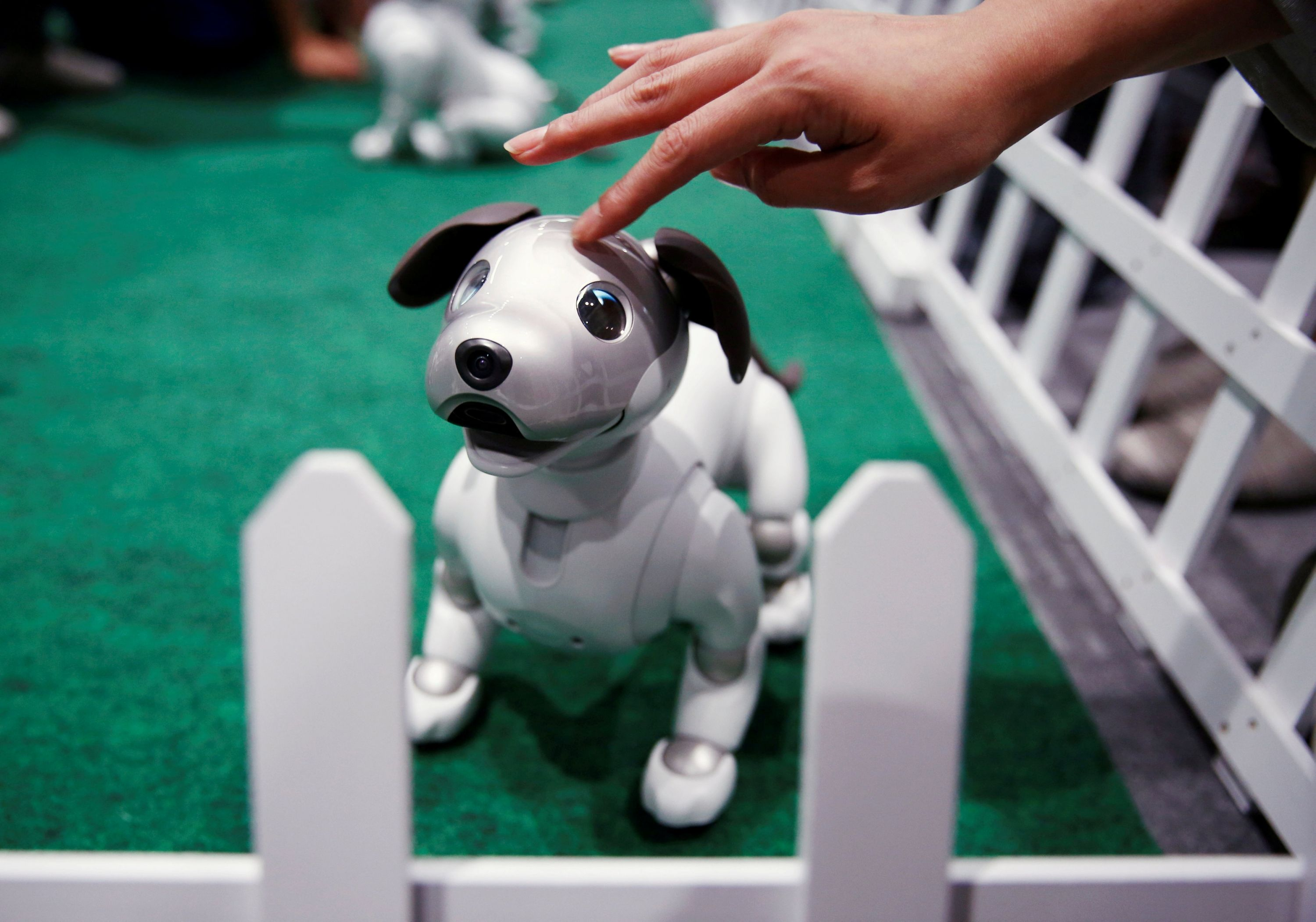 Aibo, the robot dog from Sony, comes for sale in the United
