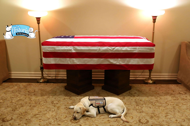 El perro de George H.W. Bush y el retrato del dolor de una mascota