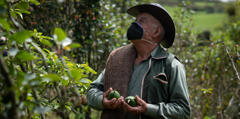 Coronavirus en Colombia | Vida en el campo durante la cuarentena por  covid-19 - Otras Ciudades - Colombia - ELTIEMPO.COM